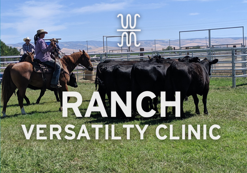 Ranch, Horse, Versatility, Clinic, June, Horsemanship, Trail, Cows